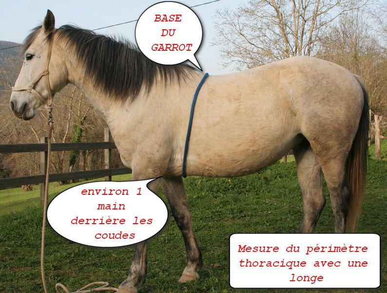 Mesurer le périmètre thoracique de son cheval pour calculer son poids.